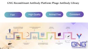Recombinant antibody platform